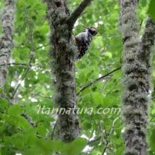Ave en el bosque