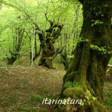 Imagen de árboles en la selva de Irati